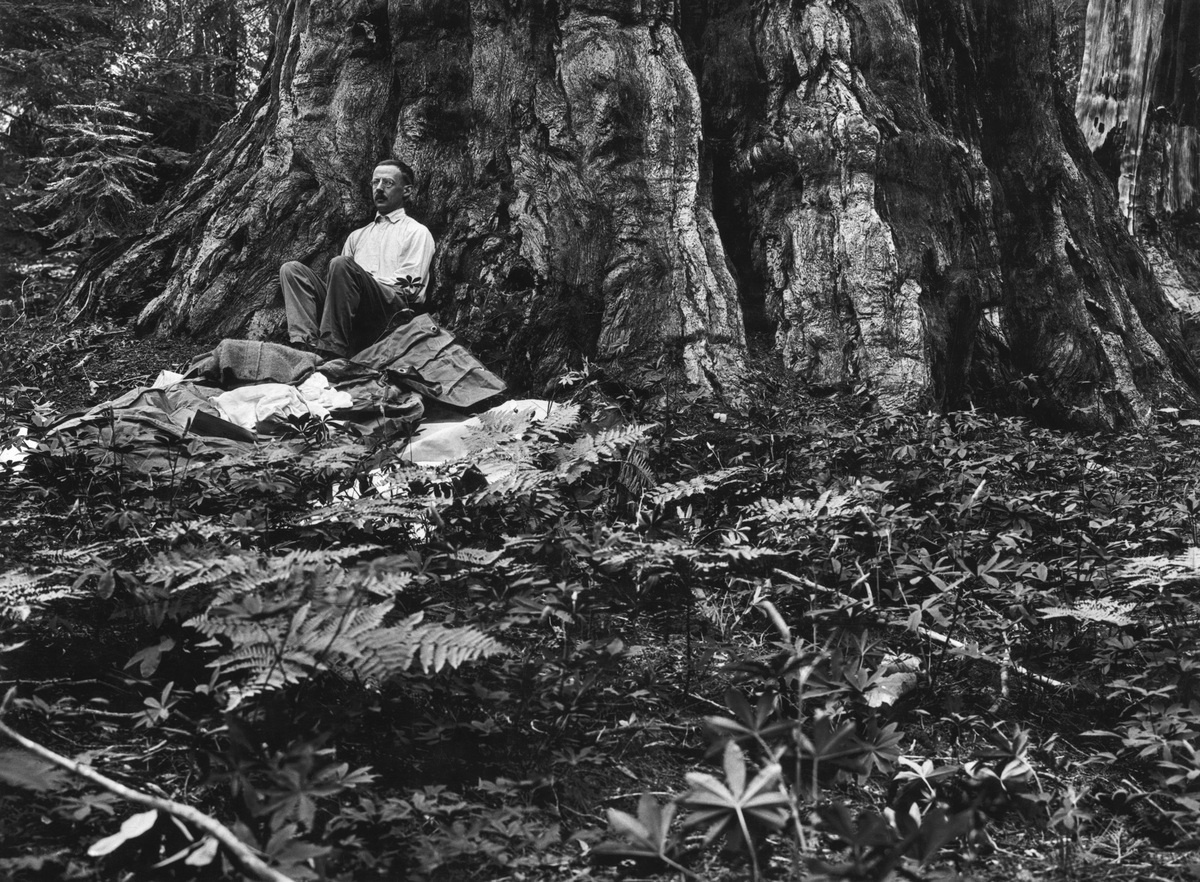 Gilbert H. Grosvenor, first full-time editor of National Geographic magazine, awakens after a night spent beneath a giant seq
