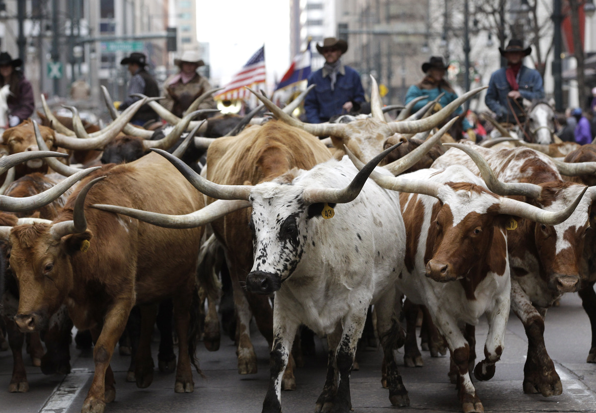 """This year marks the <a href=""""http://www.nationalwestern.com/about/"""">107th year of the National Western Stock Show</a>, held i"""