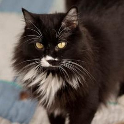 Mabel is a sweet lady who was formally a stray. She was rescued by a woman who brings strays into the shelter with the goal o