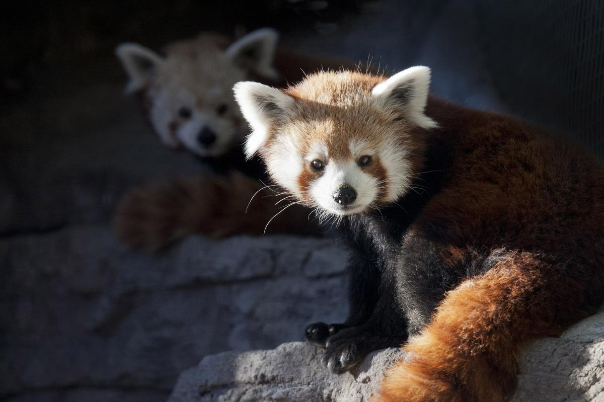 "Photo courtesy of <a href=""http://www.denverzoo.org/"">Denver Zoo</a>"