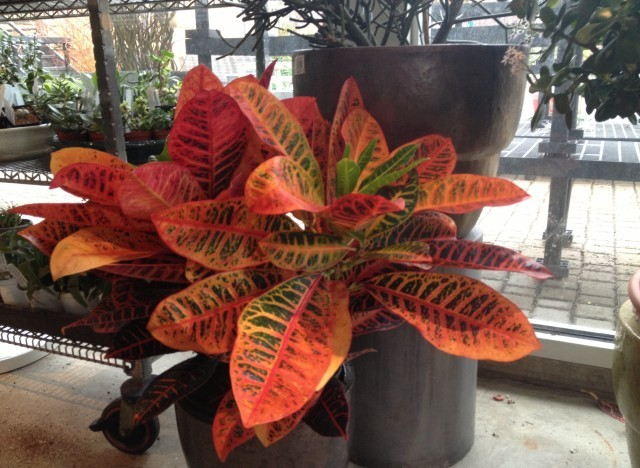 "All about <a href=""http://www.huffingtonpost.com/tara-heibel/houseplants_b_2500771.html"">house plants</a>."