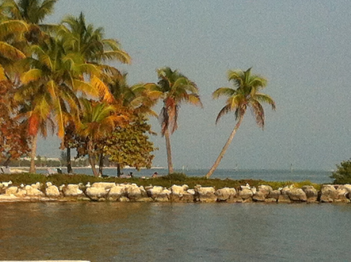 Sunday stroll from Smathers Beach to Higgs Beach, Key West, Florida.  Photo taken by Jane & Dave Evans