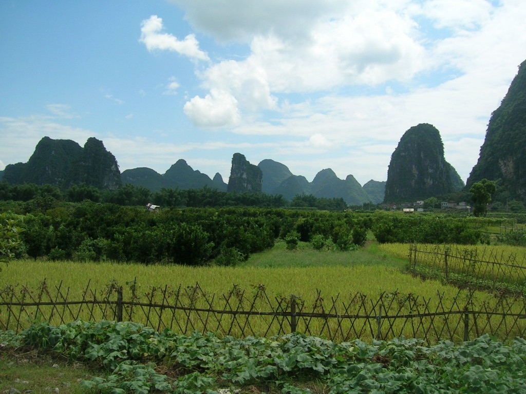 A country landscape near Guilin; rice fields spread toward the river.