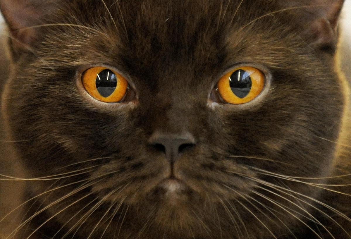 cat skin diseases scabs