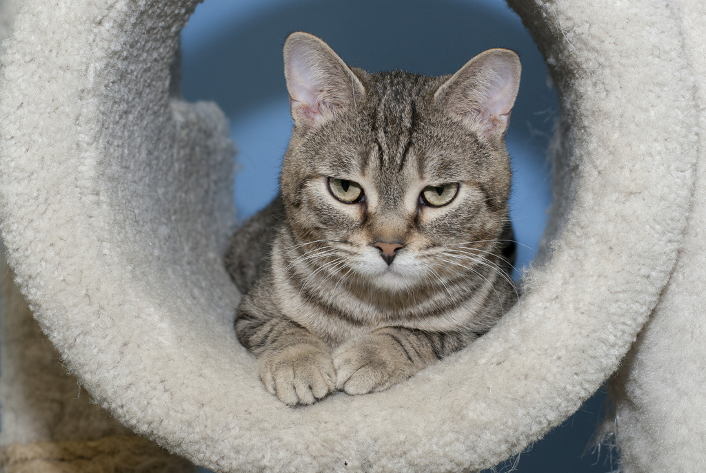 "With an expression that rivals ""Grumpy Cat,"" Rojo, a 1-year-old male, loves attention. Visit Rojo at the Tree House Humane So"