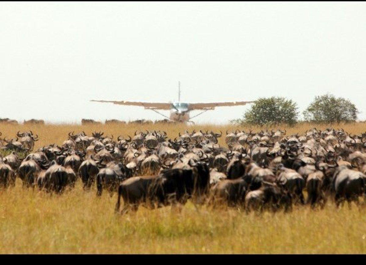 "Air traffic controllers have to <a href=""http://honeytrek.com/maasai-mara/"" target=""_hplink"">double as game wardens</a>."