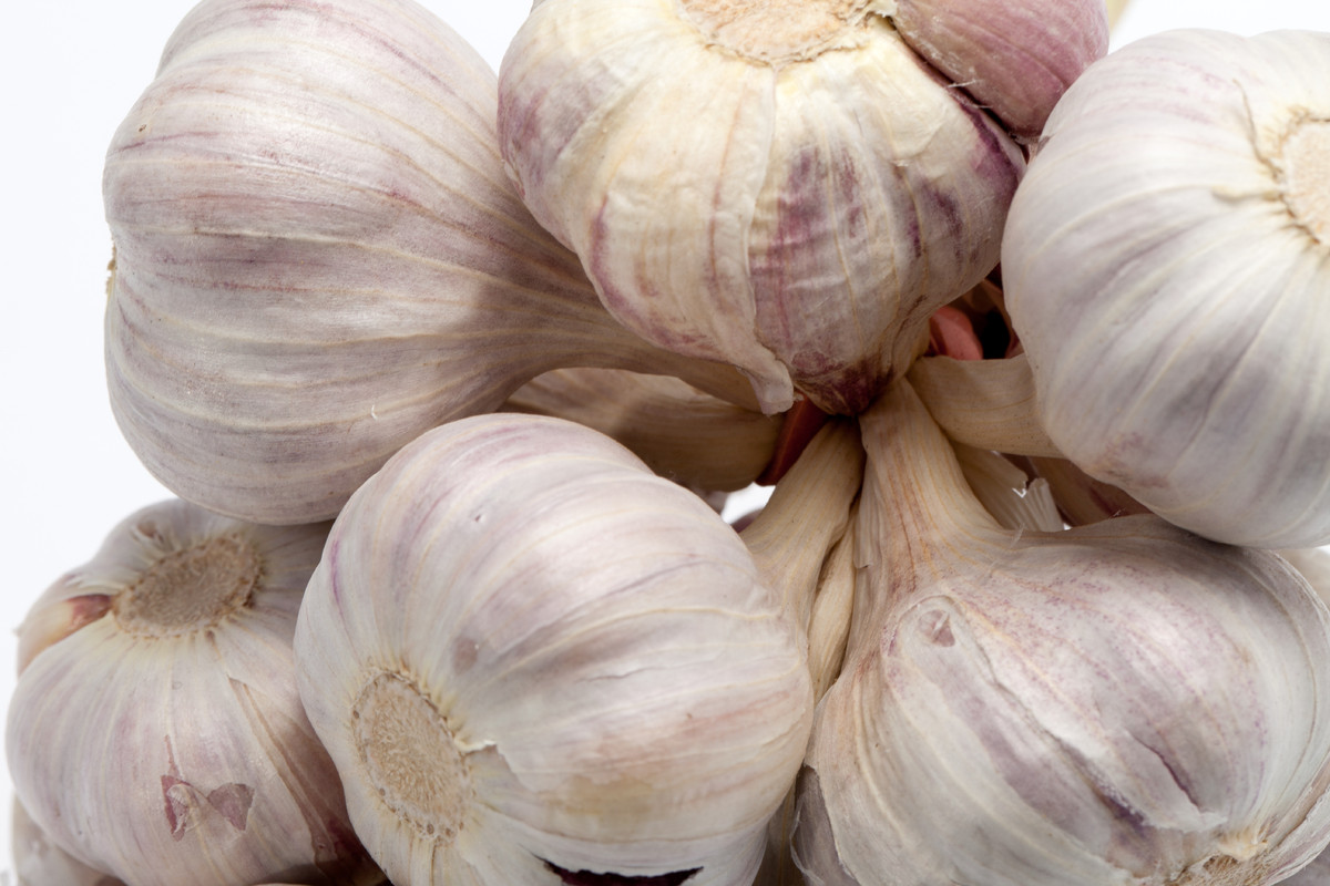 "Garlic may help prevent colds, research suggests, <a href=""http://www.livestrong.com/article/249283-what-are-the-benefits-of-"