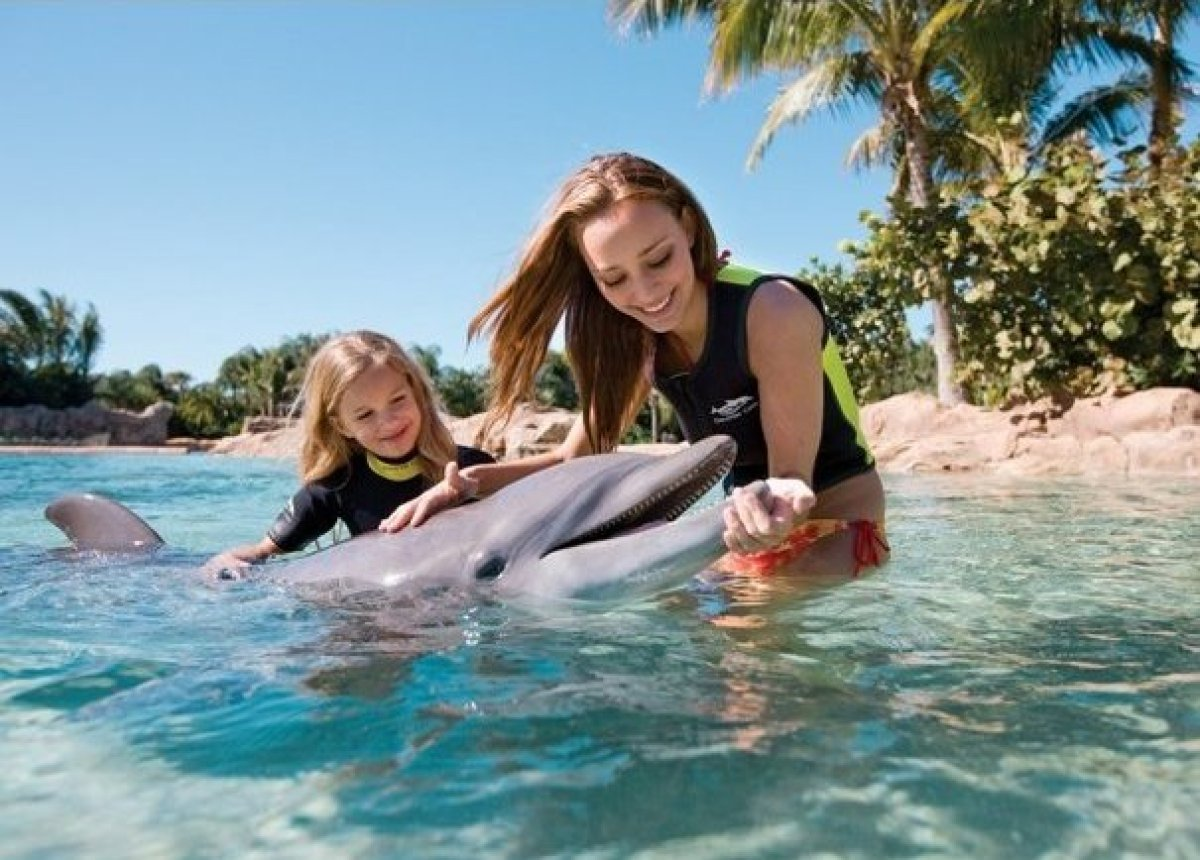 """For dolphin-loving families with a trip to Orlando in the works, a visit to <a href=""""http://www.minitime.com/Discovery_Cove-O"""