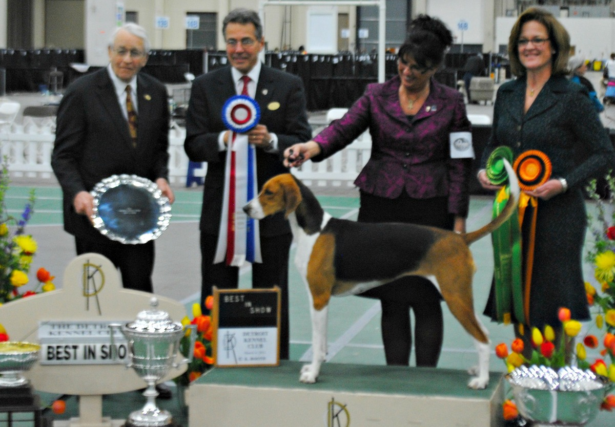 109th Annual Detroit Kennel Cub Best In Show Winner