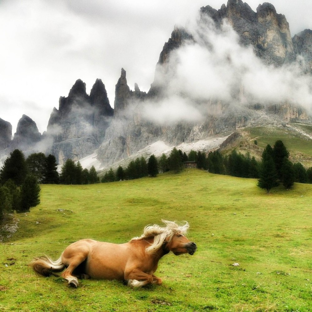 Artist: Mariko Klug Title: Hanicker Schwaige  The image was shot in August 2012 during my vacation in the Dolomites in South