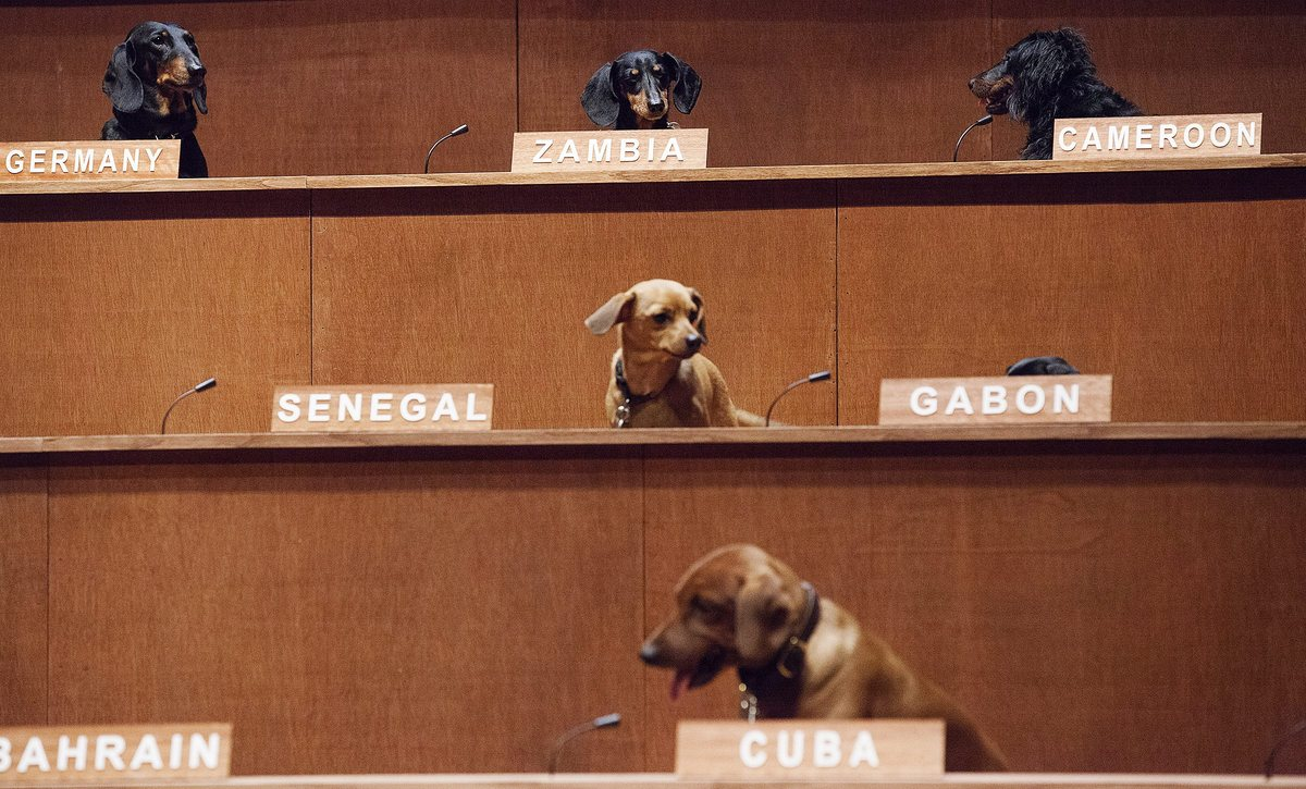 "Dachshunds sit in their positions for the performance installation ""Dachshund UN,"" where the dogs were used to mimic a United"