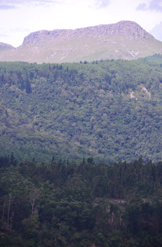 Hogsback mountain, from which the town of Hogsback takes its name.