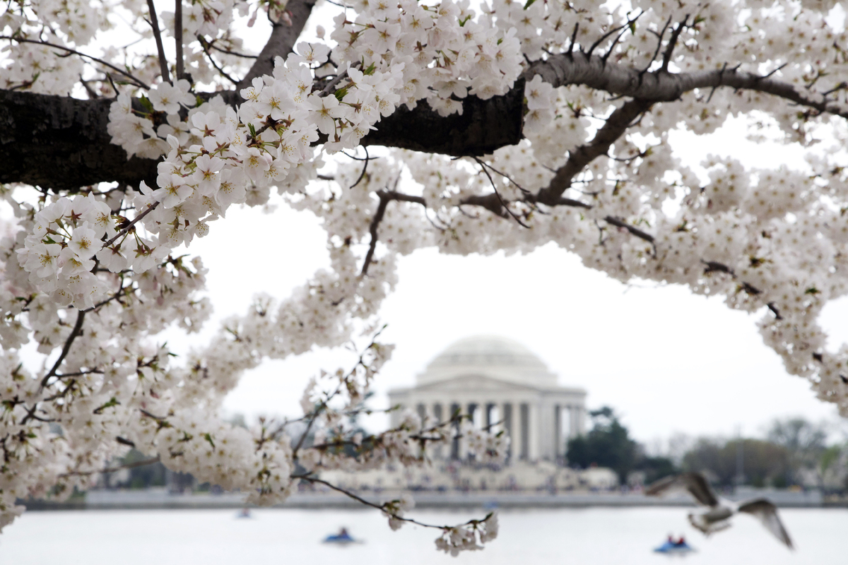 "D.C. bursts into spring each year with bright pink and white cherry blossoms. Between the month-long <a href=""http://www.nati"