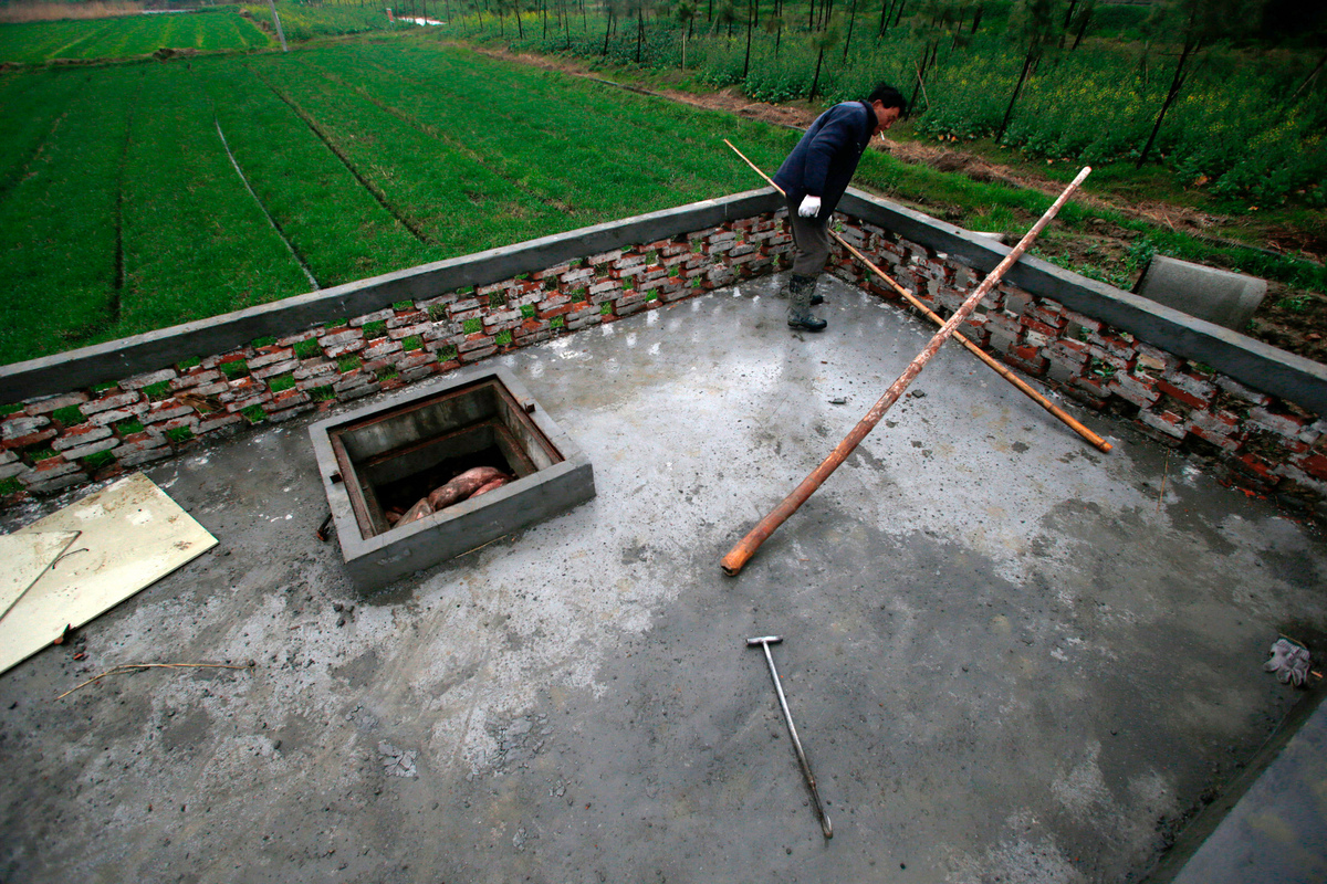 A villager dumps dead pigs into a decontamination storage built on a farmland in a town in Jiaxing municipality, east China's