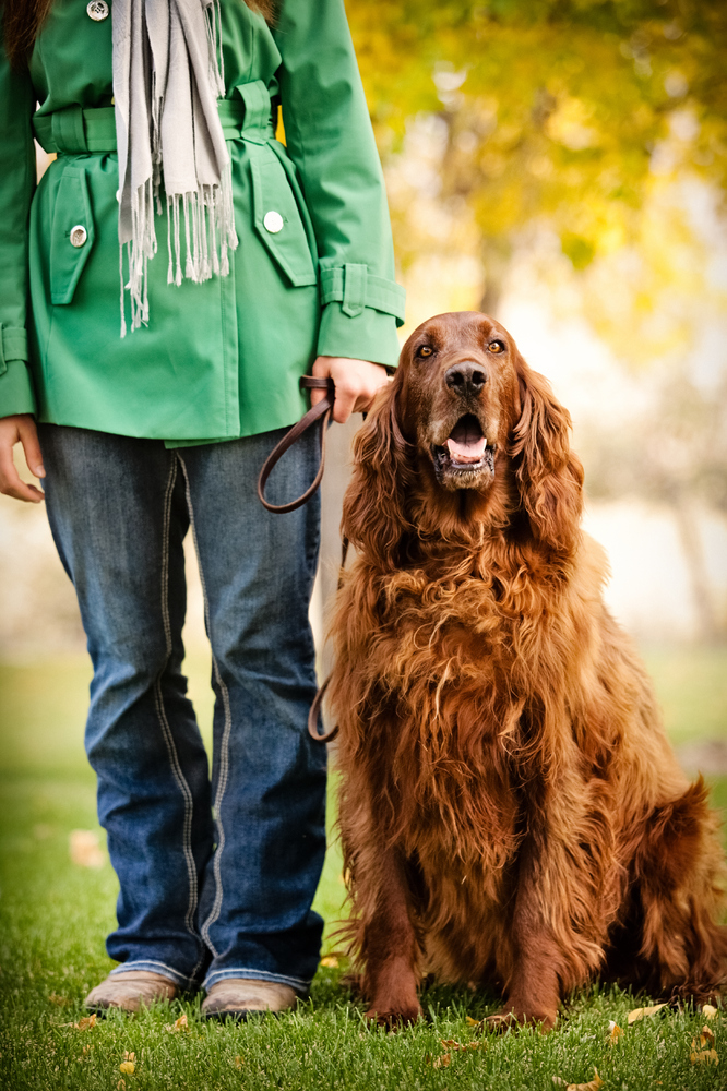 """You can spot this pretty canine a mile away, but did you know that the beautiful <a href=""""http://www.vetstreet.com/dogs/irish"""