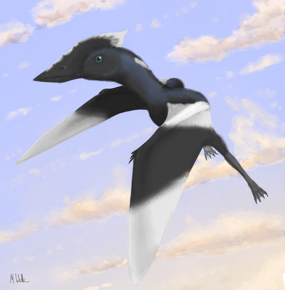This is an artist's conception of what the flying reptile would look like.
