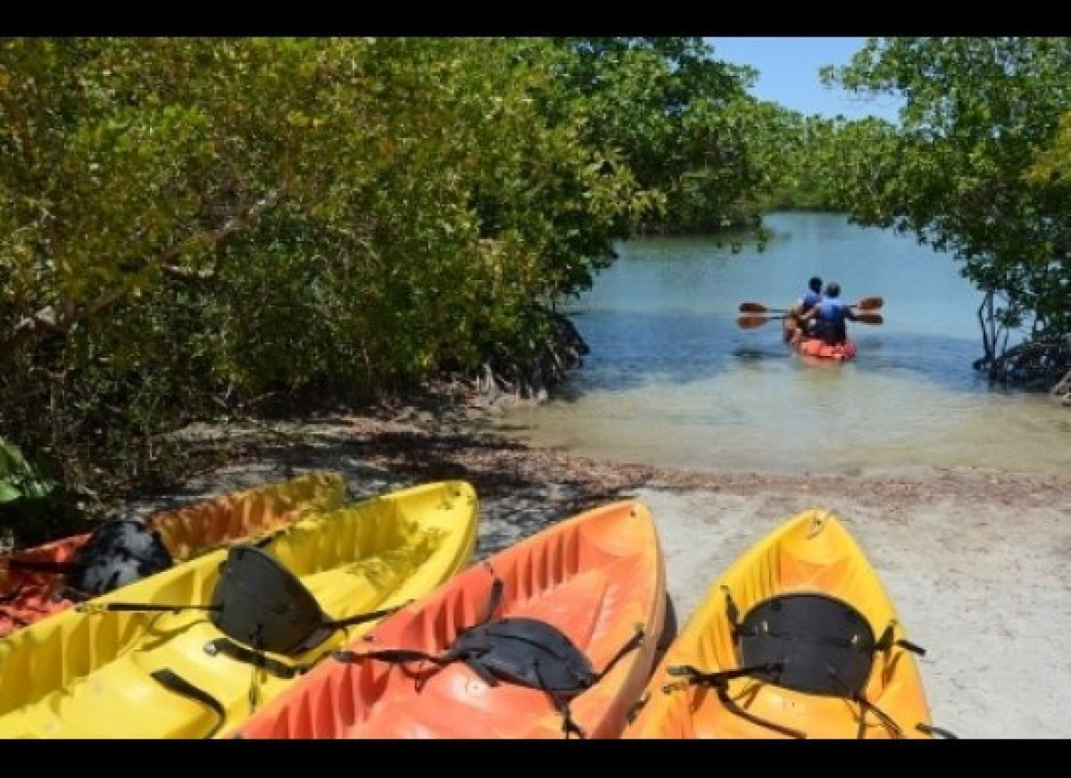 Canoeing and kayaking are a big draw at Oleta River State Park. Paddle the calm waters of Biscayne Bay and Oleta River throug
