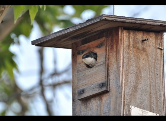 A birdhouse will add a welcoming charm to your home's exterior. To anchor the house securely without damaging the tree, a few