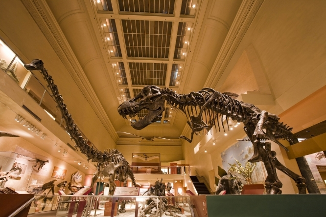 """If you want to get up close and personal with dinosaurs in D.C., start at the <a href=""""http://www.mnh.si.edu"""" target=""""_blank"""""""