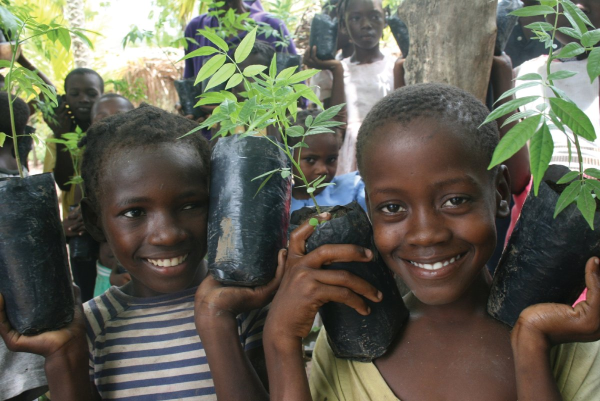 The Smallholder Farmers Alliance (SFA) plants one million trees a year in Haiti - a country with only two percent of its rema