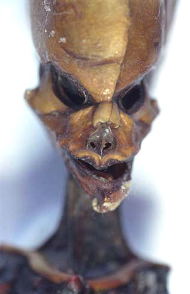 "On April 22, 2013, a documentary -- ""Sirius"" -- premiered, offering evidence of an alleged tiny, 6-inch high humanoid being d"