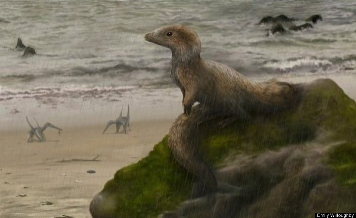 A baby megalosauroid Sciurumimus is perched on a rock by the Bavarian Sea in Germany.