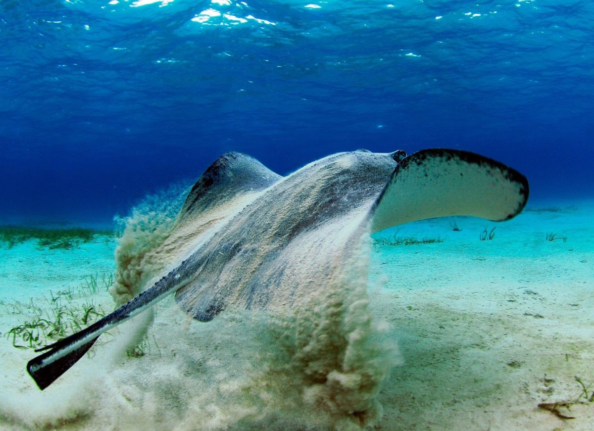 Former ISLANDS editor Ty Sawyer captured images of a stingray encounter in the Cayman Islands on one of his many trips there.