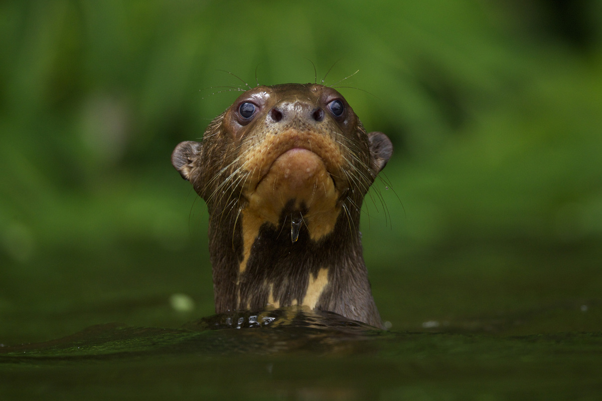The Wildlife Photographer of the Year exhibition, which showcasers winning entries from the world's largest and most prestig