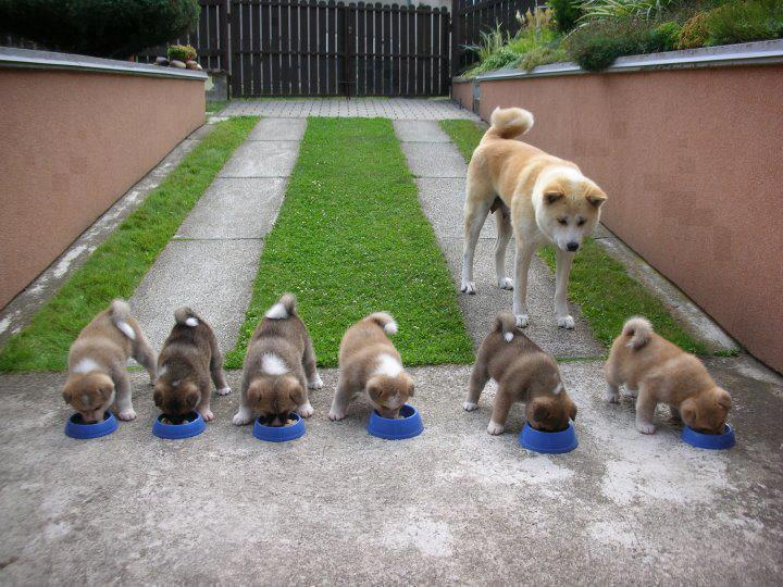 But making sure her puppies get fed first.