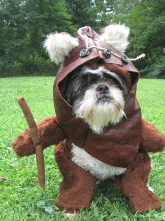 We welcome him all the way from Endor.