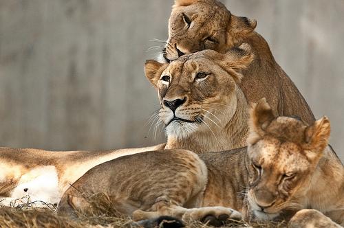 Photo: John McRay, Smithsonian's National Zoo