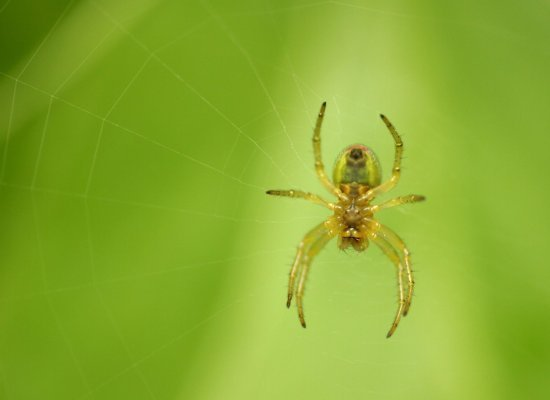 <strong>What Do They Mean?</strong>
