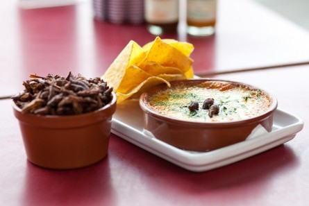 """Chapulines fundido is made with one of Mexico's most sustainably farmed, yet unusual ingredients, grasshoppers.  We take fri"