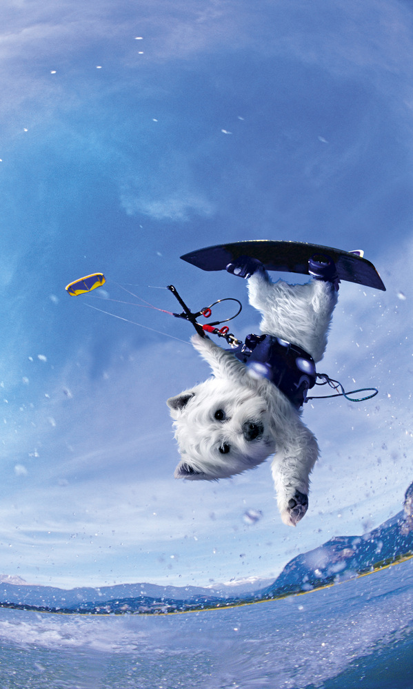 These hilarious pictures of Westie dogs doing watersports should cheer anyone up, whatever the weather.  They are a newly-lau