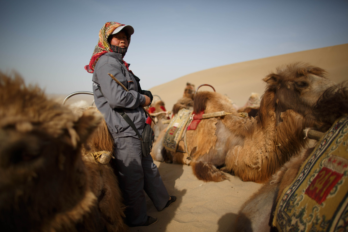 This photo taken on May 12, 2013 shows a guide waiting for tourists next to camels near the Yueyaquan Crescent Lake in Dunhua