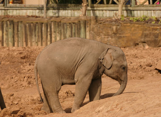 Recently in Eastern India, a baby elephant fell into an unused 12-foot-deep well that was hidden by bushes. The little guy tr