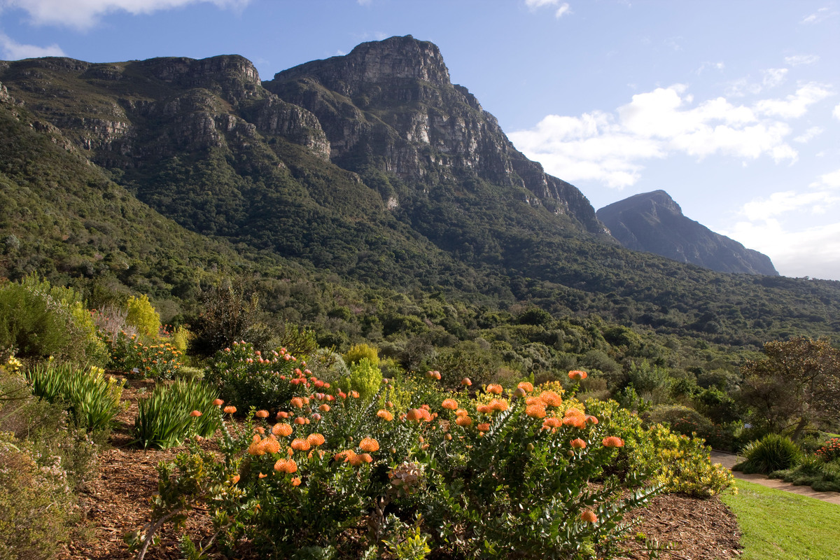 "In the shadow of Table Mountain and Dessert's Peak, the famous <a href=""http://www.sanbi.org/"" target=""_blank"">Kirstenbosch</"