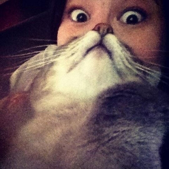 """The latest sensation sweeping the information superhighway we call the internet is the """"Cat Beard"""". This involves picking up"""