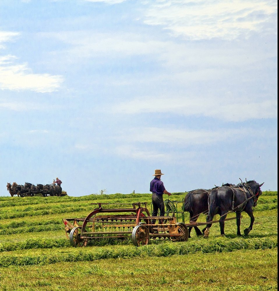 Amish farmers still till their fields using traditional techniques, Lancaster, PA.