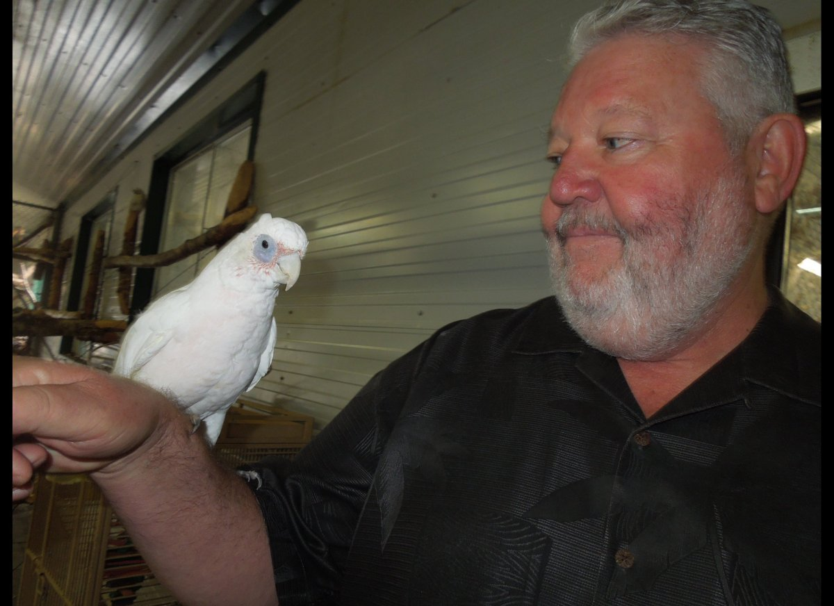 Laurence Malley and this parrot at the World Parrot Refuge in Coombs, B.C., eyed each other up after the bird cheekily asked