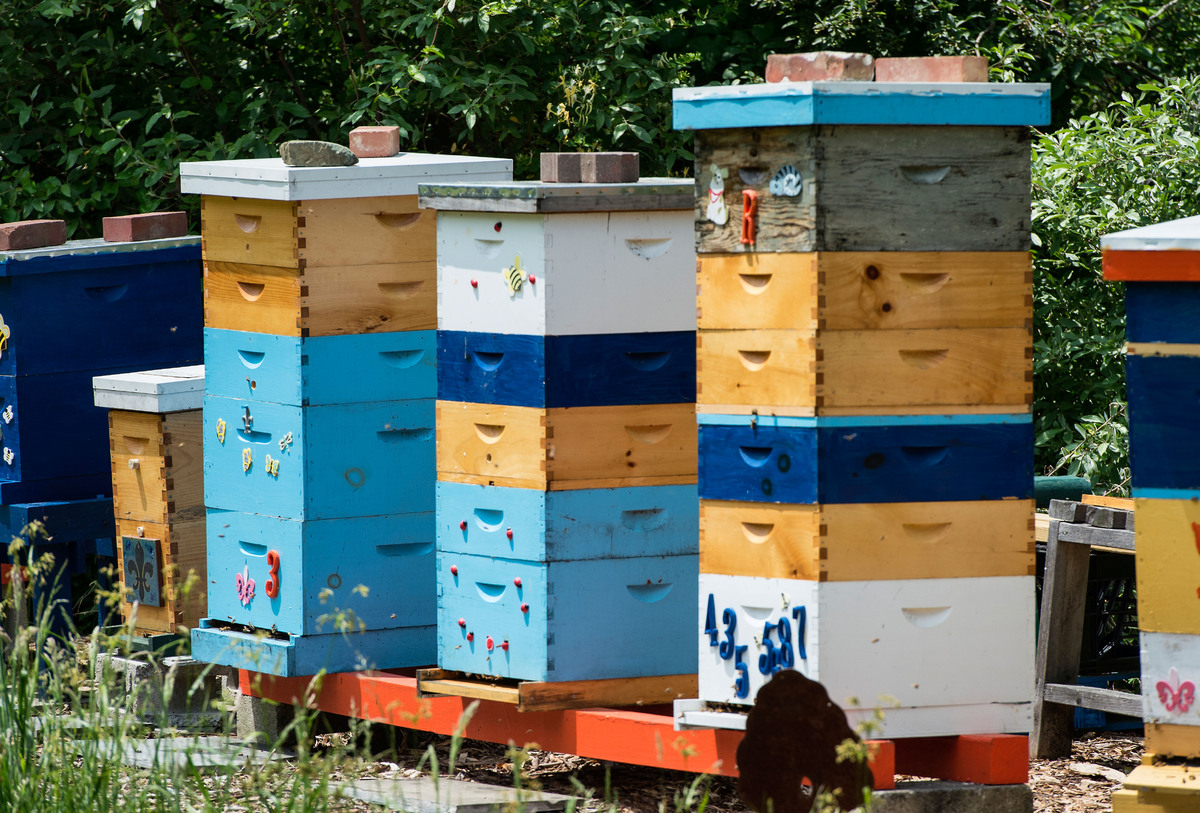 With bee populations declining, we could be on the verge of losing not just our source of honey but one of our main pollinato