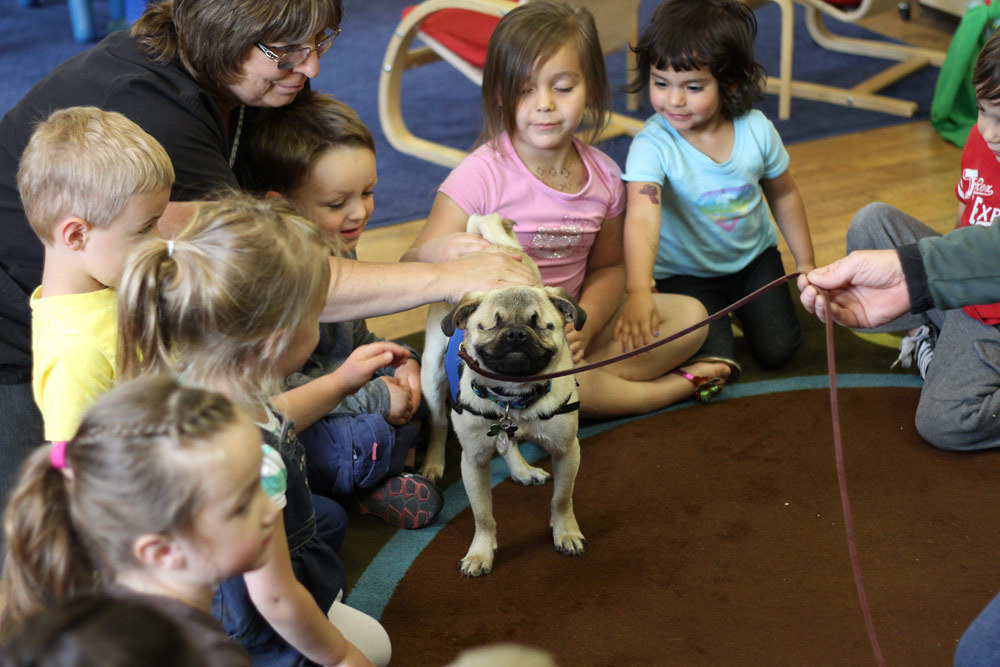 Xander, a pug who lost his eyes, works as a therapy dog in Klamath Falls, Oregon.   (Steven Silton/Herald and News)