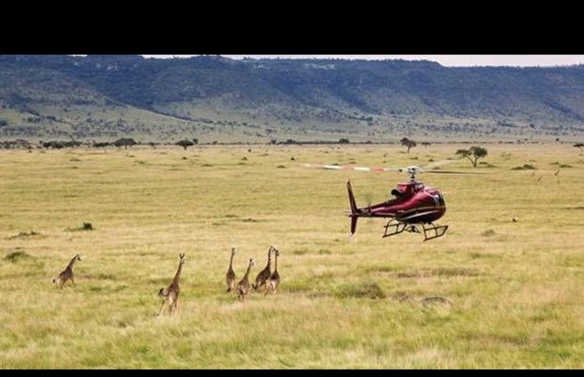 Elevating the African bush picnic to new heights, quite literally, safari camp operator Cheli & Peacock Safaris now offers pi