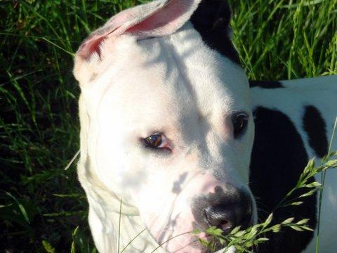 Mellow is a sweet, easygoing dog, as his name suggests. Meet this cutie, who's about three years old, at Animal Care & Contro