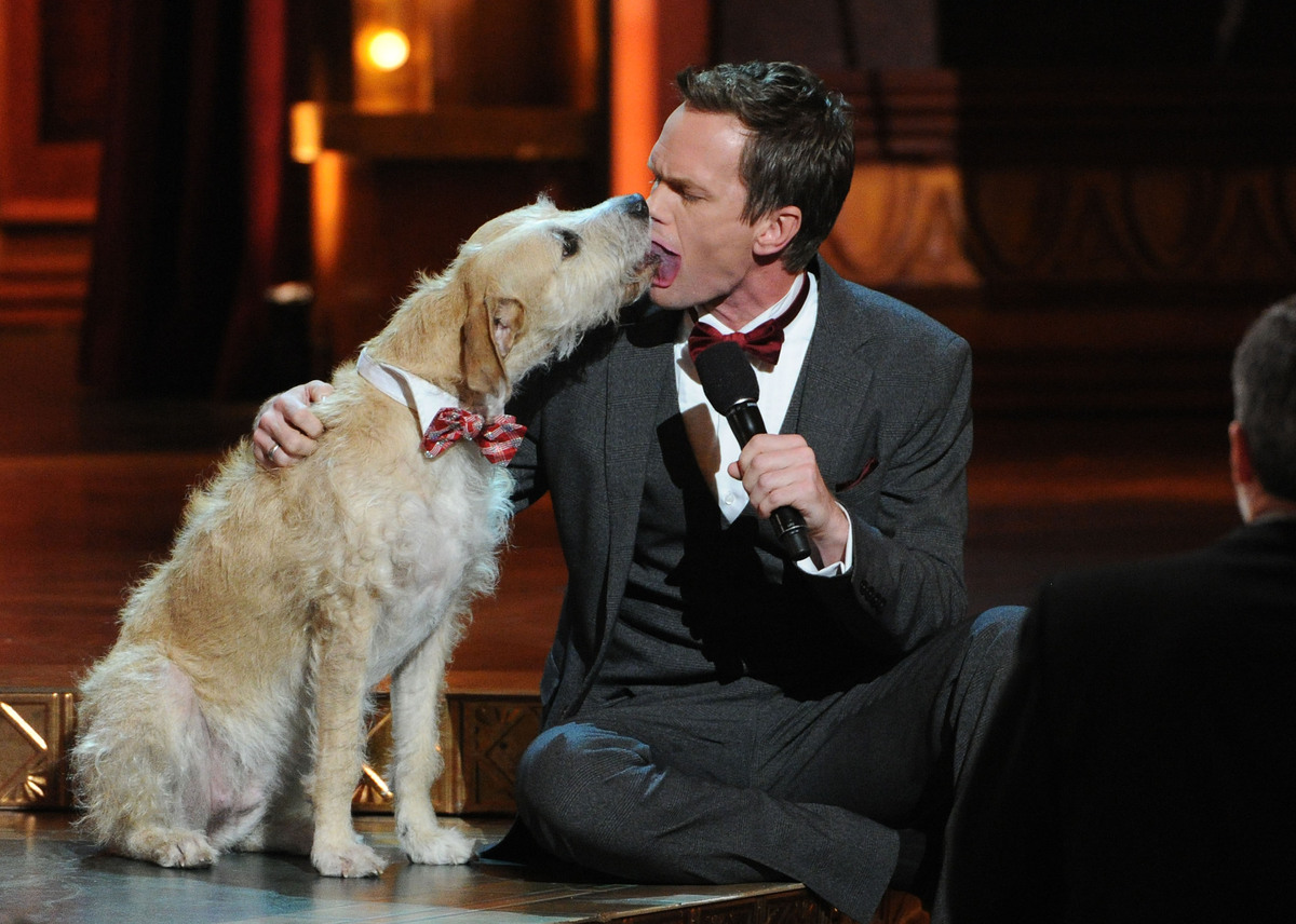 Sunny the Dog licks Neil Patrick Harris on stage at the 67th Annual Tony Awards, on Sunday, June 9, 2013 in New York. (Photo