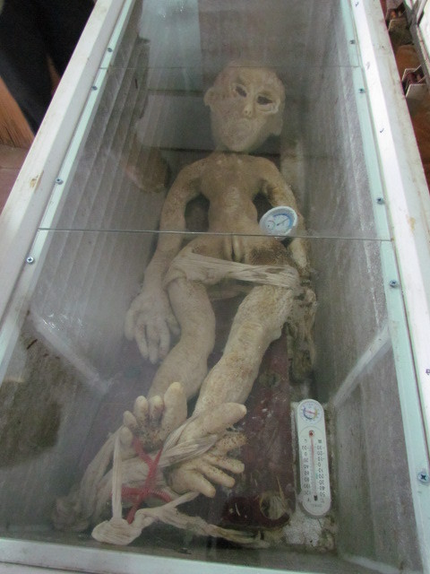 View of the fake alien which made of high qulity rubber at a freezer in Binzhou, east Chinas Shandong province, 12 May 2013.
