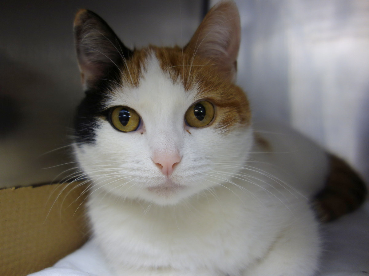Monica, about six years old, is calm and relaxed, but loves to rub your hand while being pet. Stop by Animal Care & Control o