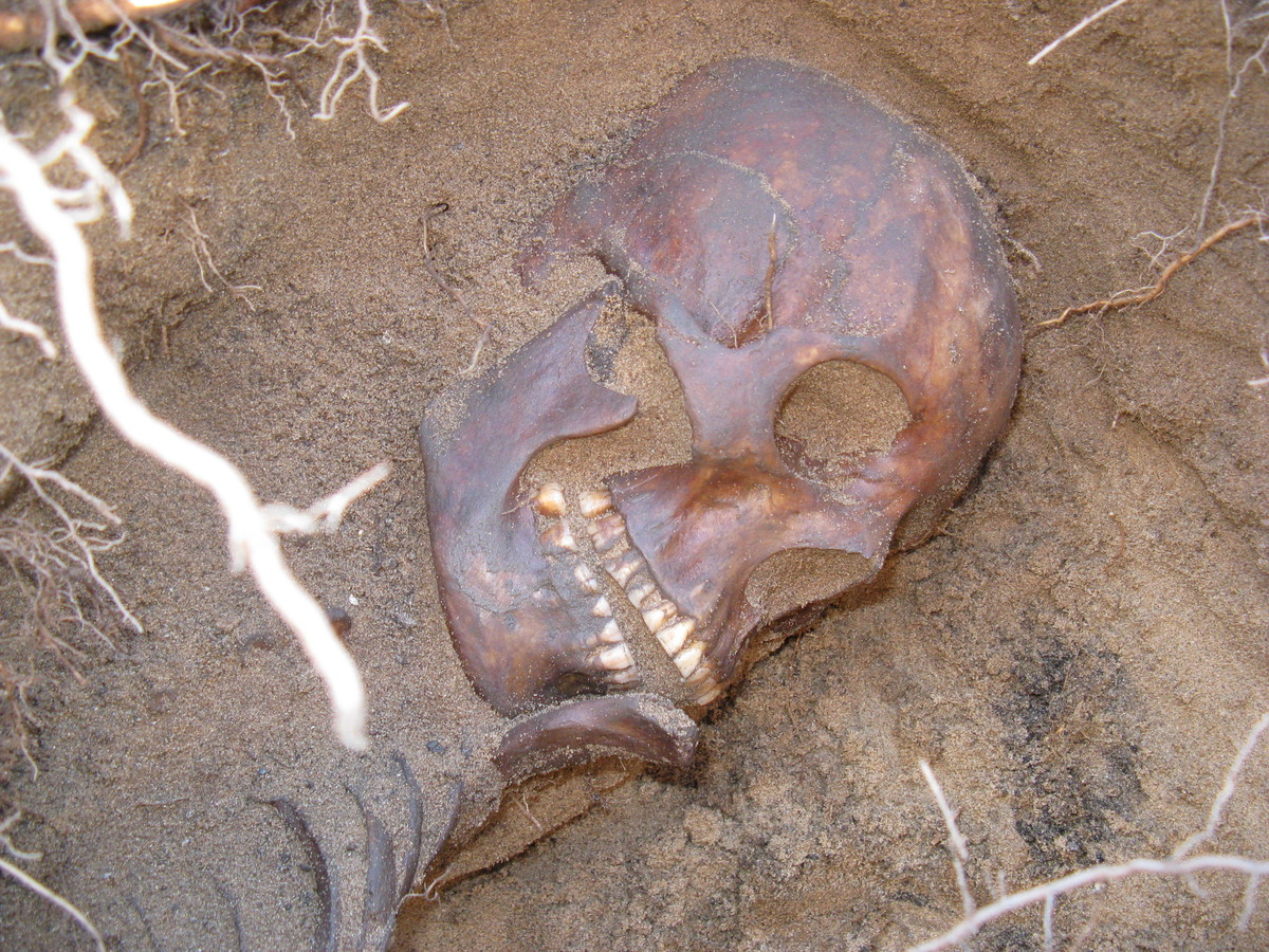 "<a href=""http://www.thestar.com/news/canada/2013/06/15/400yearold_skeleton_of_aboriginal_woman_found_in_sarnia_backyard_costs"