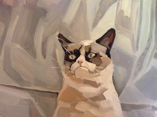 Grumpy Cat 2012, 2013
