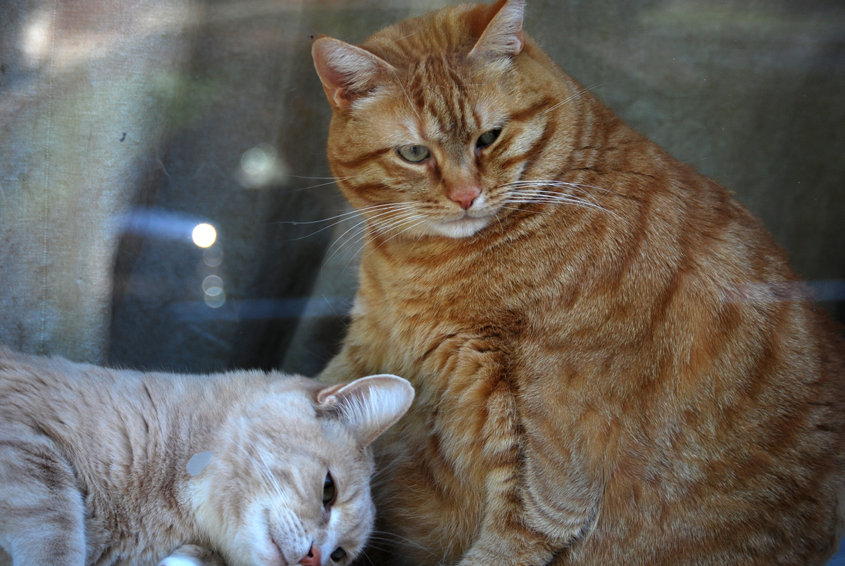 Many of us are living in glass houses when it comes to weight (both ours and our pets'), which may be one of the reasons your